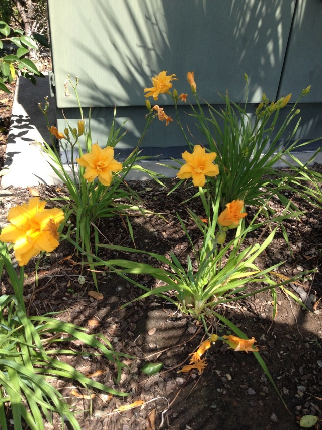 photo mcd flowers